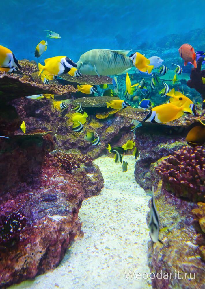 Сеульський рифи